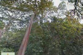 Google пустила камеры по канатам, чтобы показать Амазонку