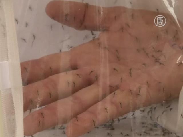 В Бразилии борются с Денге с помощью ГМ-комаров