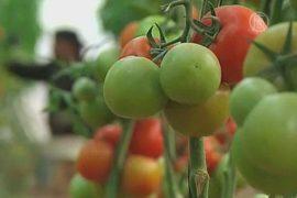 Фрукты и овощи из Газы снова везут в Израиль