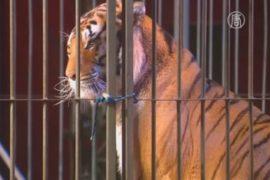 Цирковые животные в Мексике ждут новый дом
