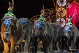 Цирк в США отпустит своих слонов на пенсию