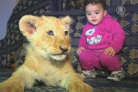Житель сектора Газа приютил двух львят