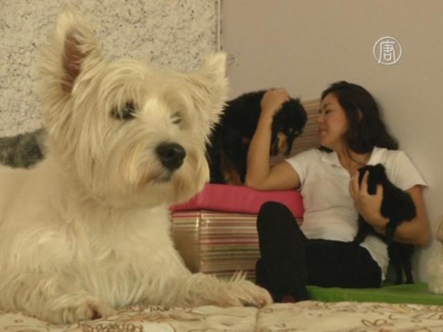 Ясли для собак делают животных счастливыми
