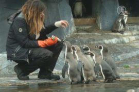 Парижский зоопарк пустит за кулисы