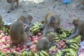 Индия: обезьяны мешают информационной революции