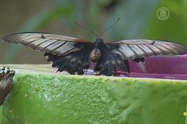 15 тысяч бабочек поселились в павильоне в Дубае