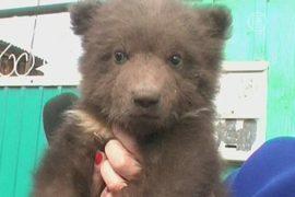 Семья из Иркутской области приютила медвежонка