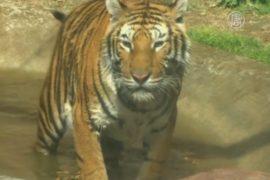 В Мексике ищут дом для тысяч цирковых животных