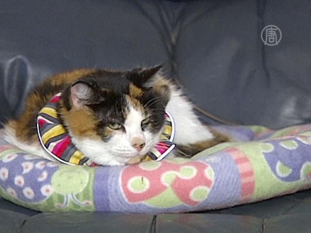 В Австралии птиц спасают от домашних кошек