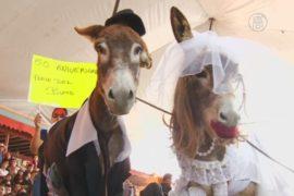 В Мексике проходит фестиваль ослов