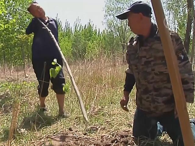 Два друга-инвалида сажают деревья в Китае
