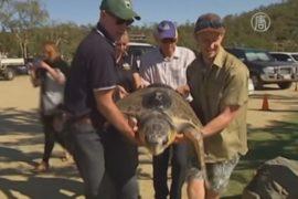 Спасённую черепаху вылечили и отпустили в море