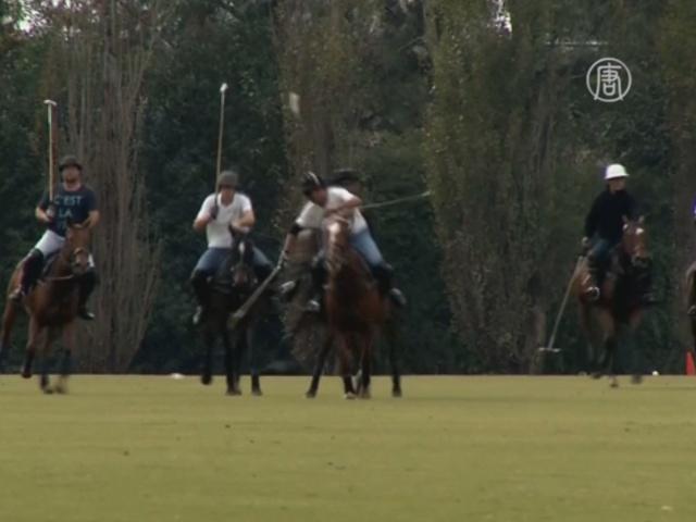 Поло-пони — гордость Аргентины