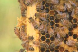 В США пчёл будет защищать национальная программа
