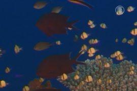 ЮНЕСКО решает судьбу Большого Барьерного рифа