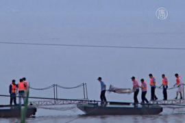 В Китае продолжают искать погибших на реке Янцзы