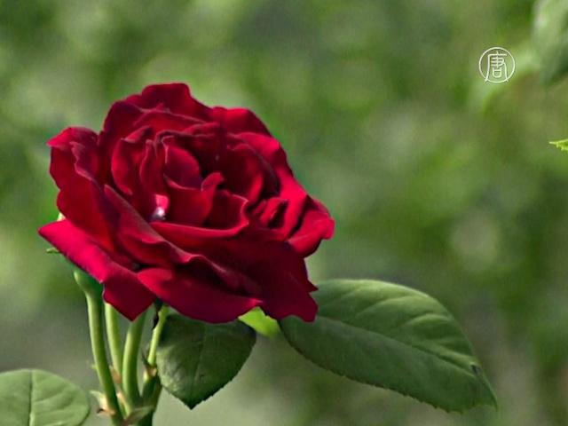 Конференция роз прошла в Лионе