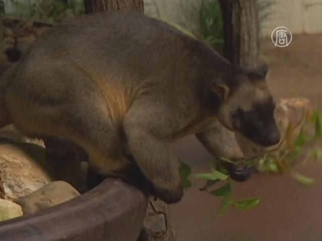 Программа разведения кенгуру даёт плоды