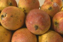 В Индии проходит фестиваль манго