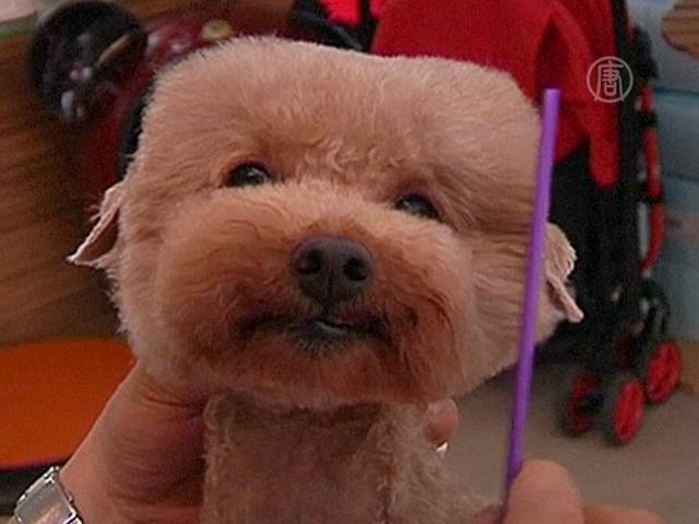 Тайванец придумывает стильные причёски для собак