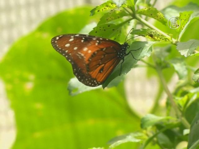 Сад бабочек впервые открылся на Кубе