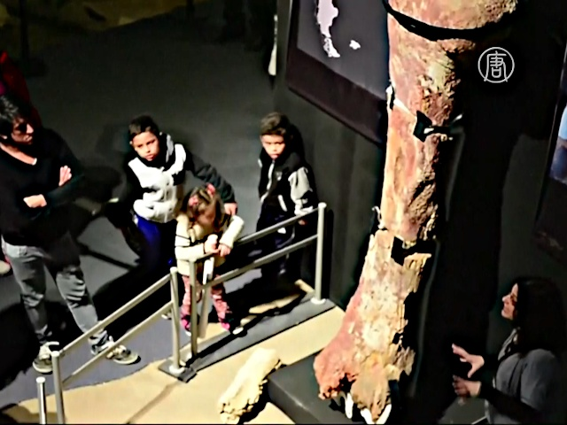Кости гигантских динозавров показали на выставке