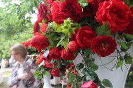 Фестиваль садов и цветов посвящается розе