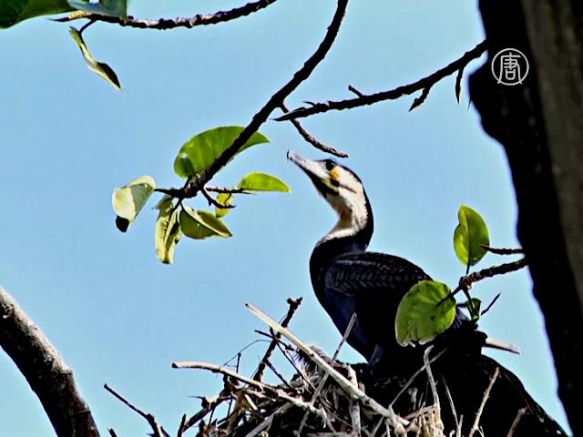 В поисках «птичьего рая» Уганды