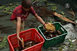 4 тысячи редких черепах спасли от контрабандистов