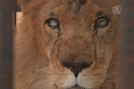 В Перу животных спасают из передвижных цирков