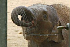 В зоопарках Европы питомцев спасают от жары