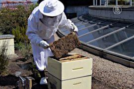 В отеле Канады выращивают свёклу и разводят пчёл