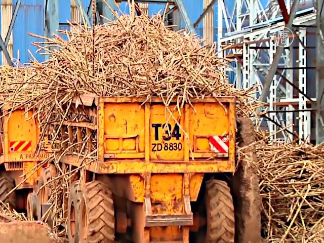 Топливо из сахарного тростника служит экологии