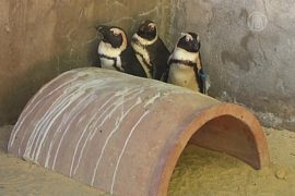 Питомцы тбилисского зоопарка переживают стресс