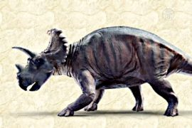 Новый вид трёхрогих динозавров открыли учёные