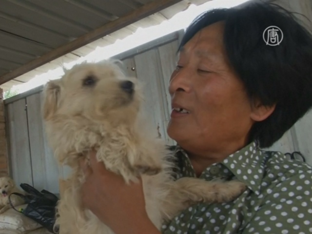 Китаянка спасает собак от съедения