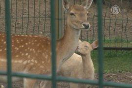 Ярославский зоопарк переживает бэби-бум альбиносов