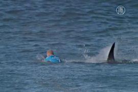 ЮАР: на серфера напала акула