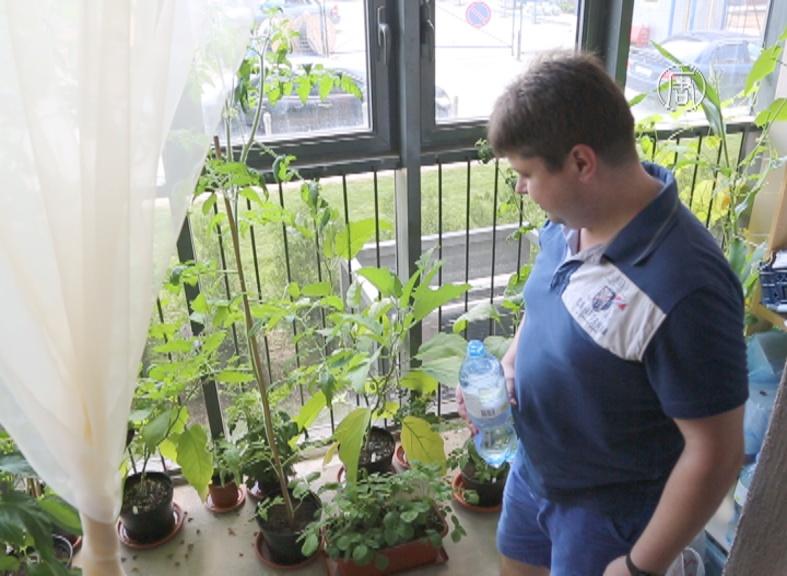 Москвич разбил огород на балконе