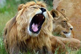 ООН берёт под защиту диких животных