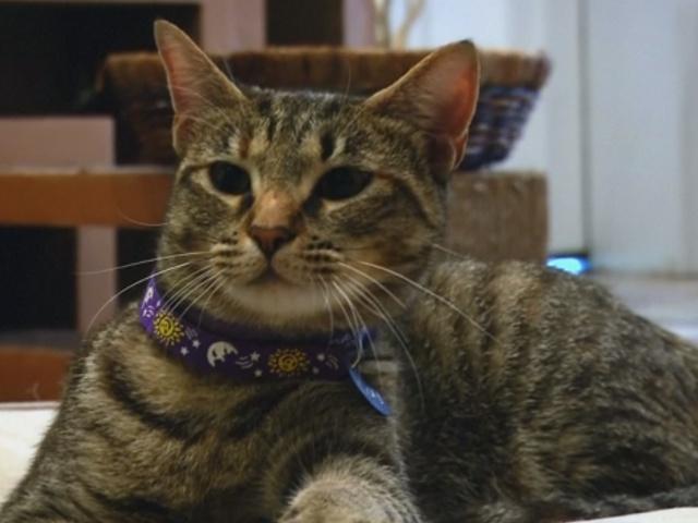 В Вашингтоне открылось первое «кошачье кафе»