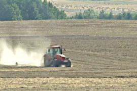 Жара уничтожает урожай в Польше