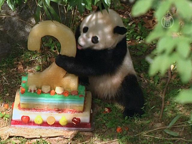 Панду из Вашингтона поздравили с днём рождения