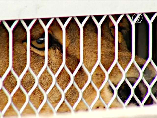 Животных из цирков Мексики отправили в США
