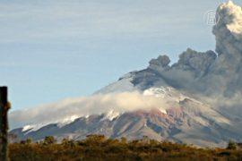 Активисты спасают брошенных из-за вулкана животных