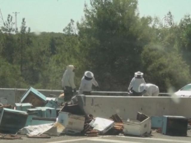 Турция: на трассе перевернулся грузовик с ульями