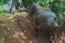 Слонёнок помогал людям доставать себя из колодца