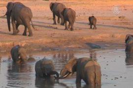 Принц Уильям призвал защитить слонов и носорогов