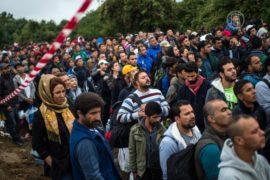 Беженцы продолжают переходить границу Венгрии