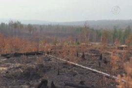 Выгоревший лес близ Байкала пытаются восстановить